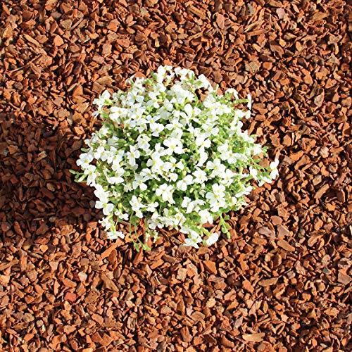 Terra-Discount Premium Pinie 600 Liter (10 x 60 Liter) mittel, Körnung 8-15 mm, Pinienrinde, Pinienborke, dekorativer Bodenbelag